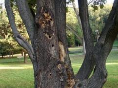 park strom
